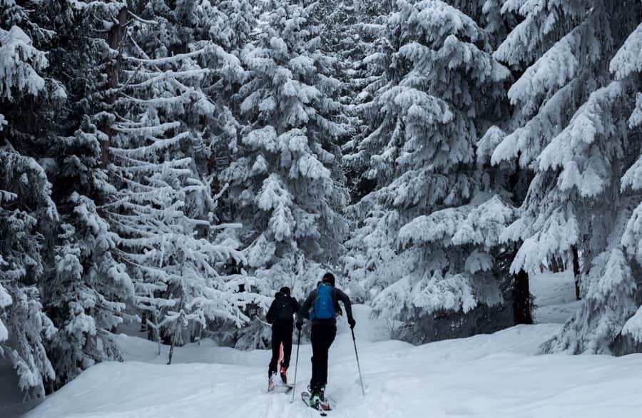 Snow Ski Trees